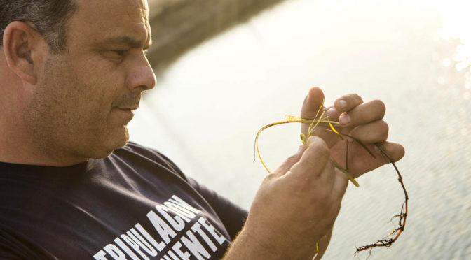 El chef Ángel León descubre un nuevo superalimento: el 'cereal marino'